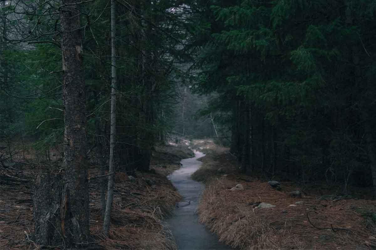 landscape-forest-river